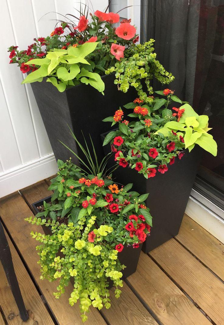 image result for 16 container planting sommer auf balkon terrasse pinterest terrasse. Black Bedroom Furniture Sets. Home Design Ideas