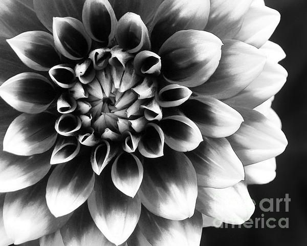 Mad about you photograph by kathi mirto fine art prints and posters for sale floral photographyamerican artistsartist artwhite