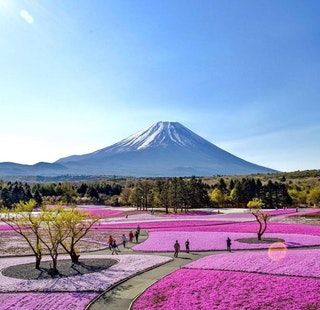 Spring is coming. ~ Fuji, Japan : pics