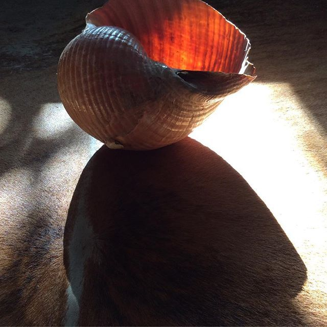 Búzio#myworld #athome #seashells #dazulterra