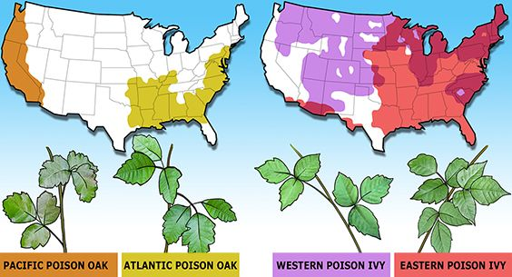 Identifying and Avoiding Poison Oak and Poison Ivy
