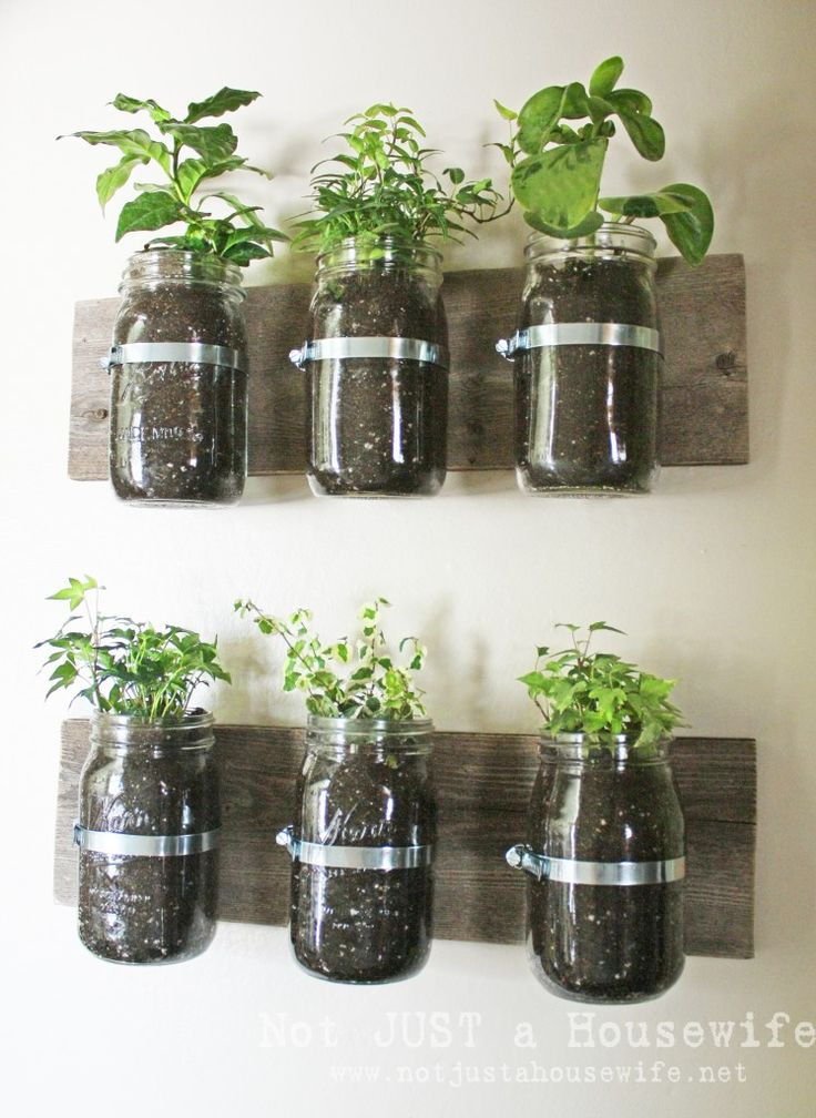 Mason jar wall planters...I picture this in the kitchen with some herbs.