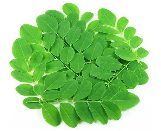 Nähr- und Vitalstoffe der Moringa stecken in den Blättern
