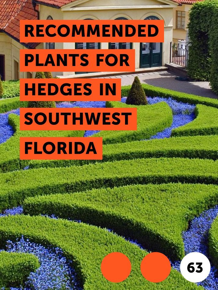 Recommended Plants For Hedges In Southwest Florida With Images