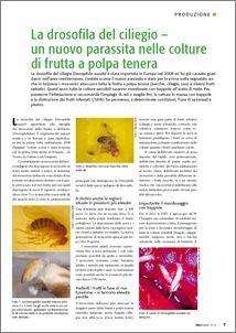 Organic Eprints - La drosofila del ciliegio – un nuovo parassita nelle colture di frutta a polpa tenera