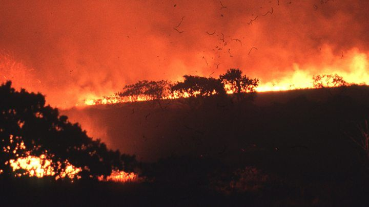Humans Blamed For Mass Wildlife Loss Visit Brazil Wildlife Fire