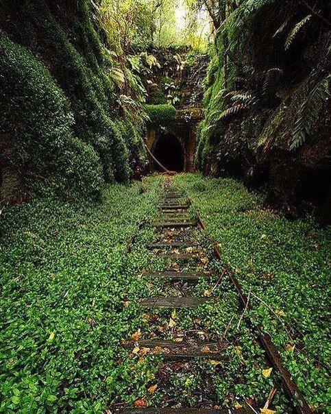 Заброшенный тоннель в Хеленсбурге, Австралия. Глубоко внутри живет колония светлячков.