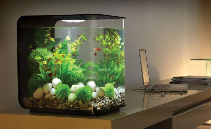 Biorb flow aquariums acrylics pets and plants for Best place to buy betta fish