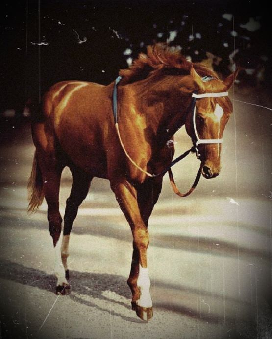 Secretariat.....so beautiful