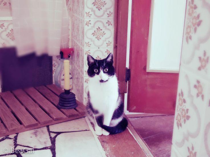 My tomcat kiči