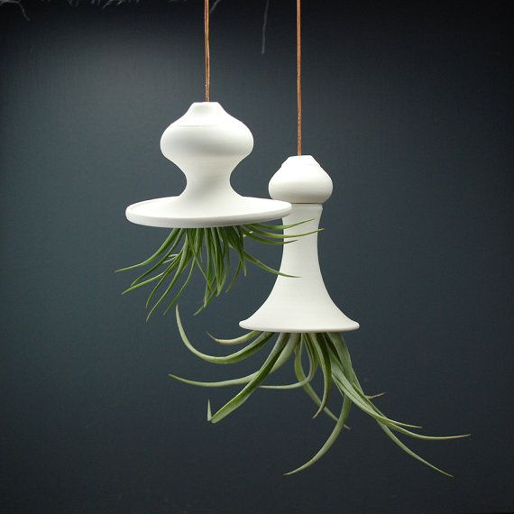 Two Hanging Air Planters - Handmade Ceramic - Squash Blossom with Tillandsia Air Plant. $75.00, via Etsy.
