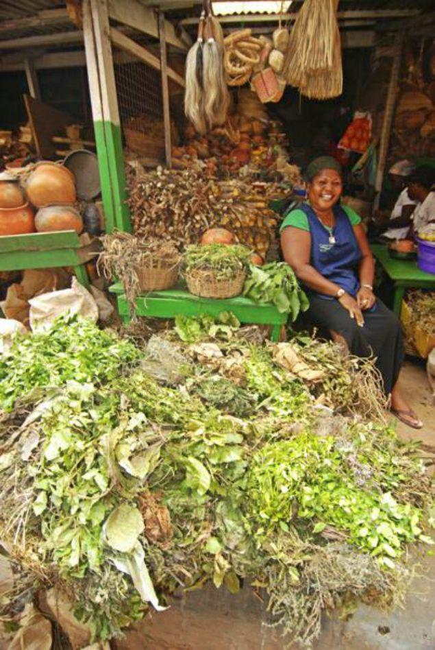 Some Medical Herbs And Plants: Botanical Names In Yoruba Language