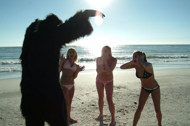 Time for the Ape of the Day!  Fun fact: Florida's skunk ape is a proud alumnus of Trump University.