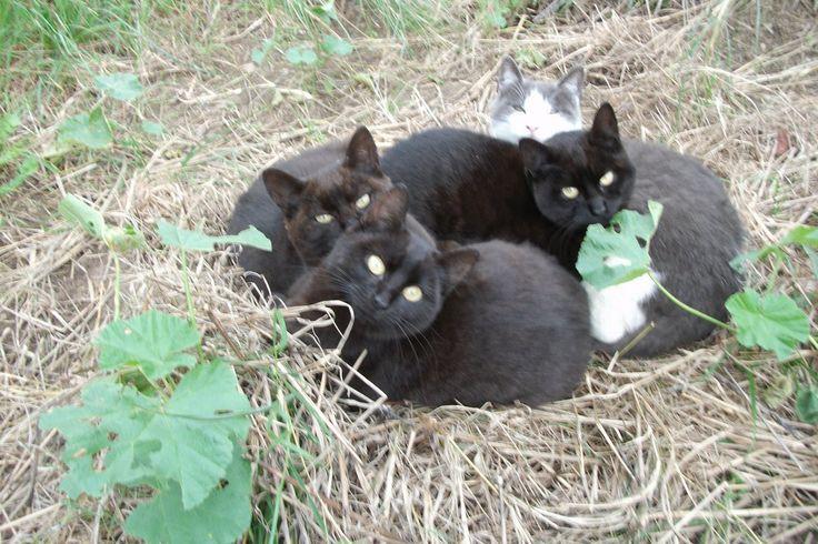 Ce sont les chats de Lulu eux-mêmes qui vous écrivent pour lancer un SOS ! Ils veulent sauver leur association et rendre le sourire à leur bienfaitrice qui se fait beaucoup de soucis pour eux et pour leur avenir.  Pour que 2016 ne soit pas l'année d'un terrible drame, ils aimeraient bien pouvoir compter sur la mobilisation de tous !  Ils ont connu le pire, ils sont choyés, leurs ventres sont pleins, ils ne voudraient pas que tout ça se termine en catastrophe.