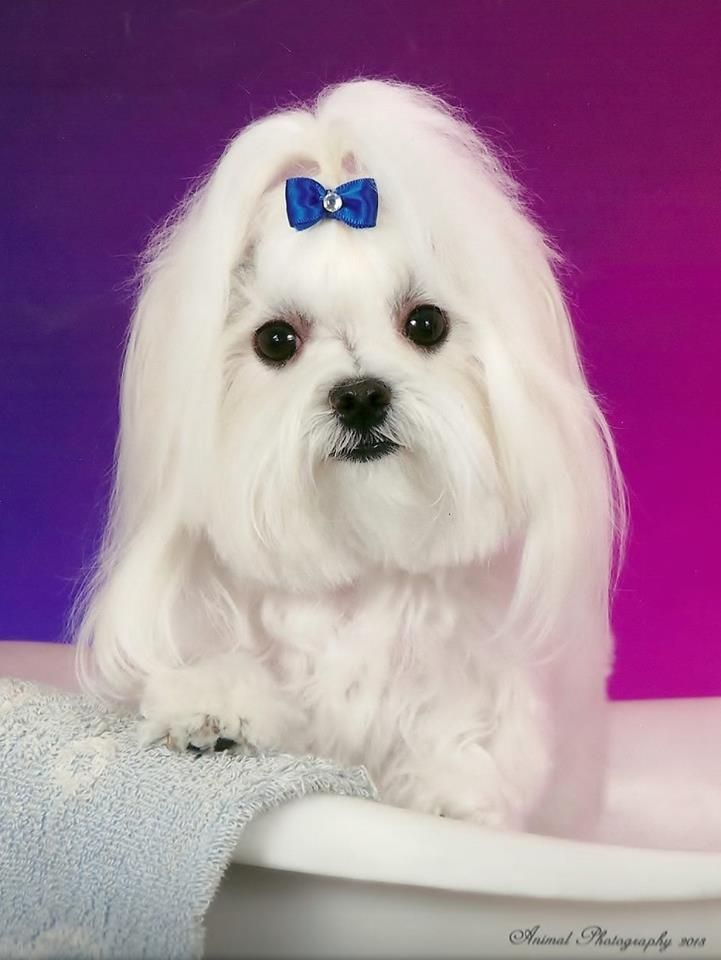 Cody Keeps His Hair In A Puppy Cut Not Too Long Not Too Short Her