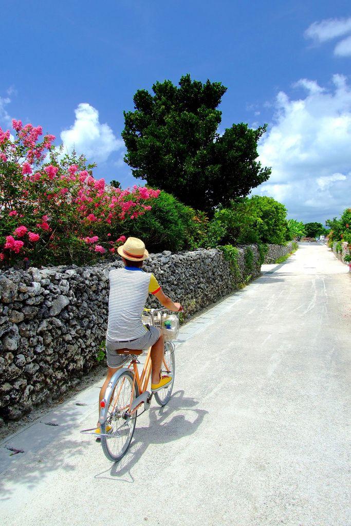 自転車で走っていたら、 石垣の内側に花と緑葉が続く。   ご機嫌な風景に出会った。