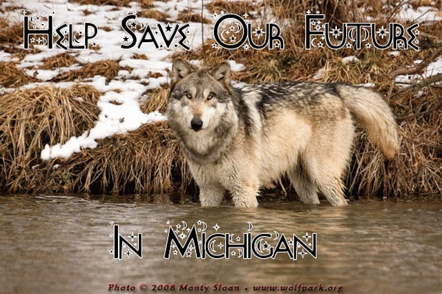 hearts jewelry collection Stop the Slaughter of Wolves in Michigan Before it Starts   Please sign and share petition  Thanks