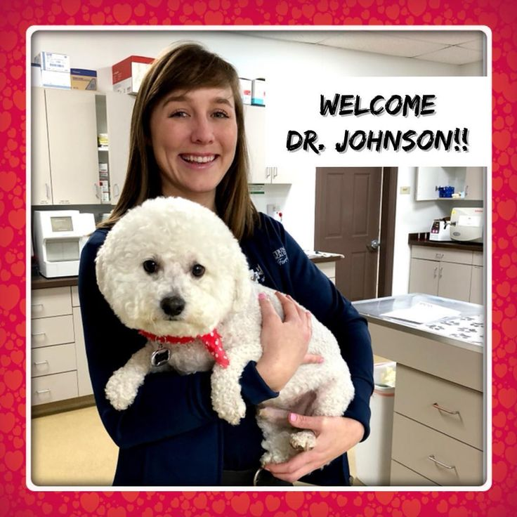 Lets show some love to Dr. Nikki Johnson as she joins our VMC Fort Mill family today! We are so excited to have her join our team! As you can see Wilson here and his perfect poofed hairdo totally approves! Plus Wilsons mom is going to be attending our FREE Dental Happy Pet class to get $40 off his upcoming dental cleaning!! Then his smile will match his style! Go to www.vmcfortmill.com to reserve your spot today! #vmcfortmill #fortmill #heathypethappypet #freeclienteducation…