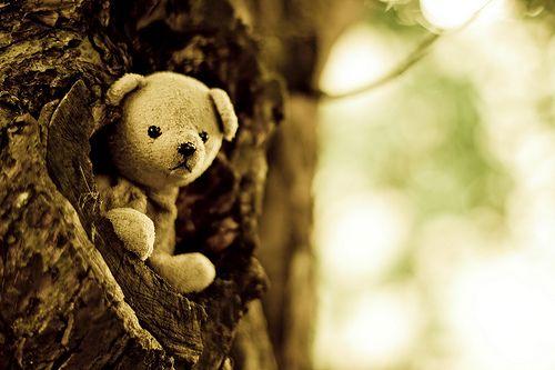 treetop teddy