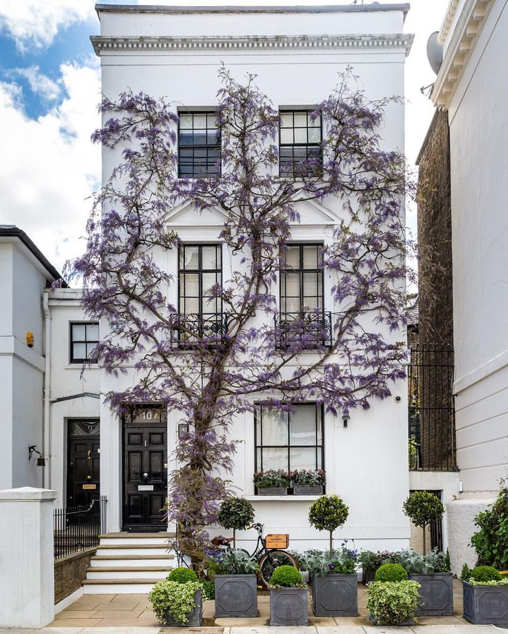 House covered in spring wisteria in Kensington, London
