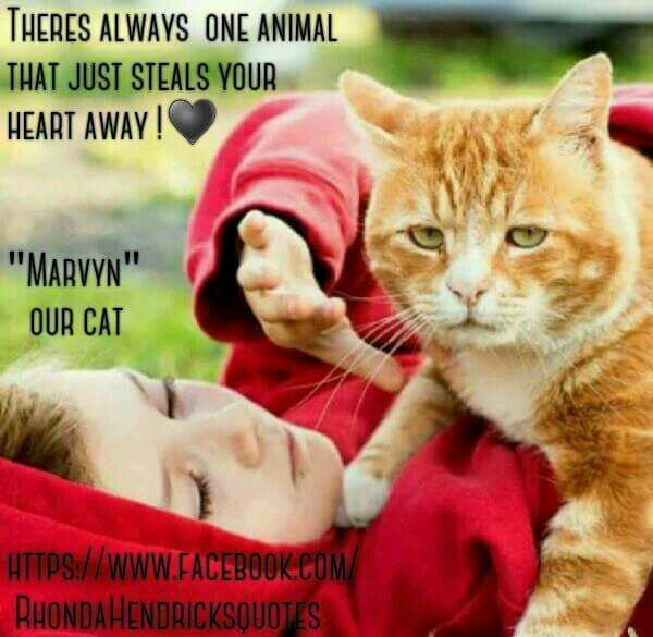 """There is always that one animal that just steals your heart. Our daughter, Alyssa with our cat """"Marvin"""" Rhonda Hendricks Quotes /FB"""