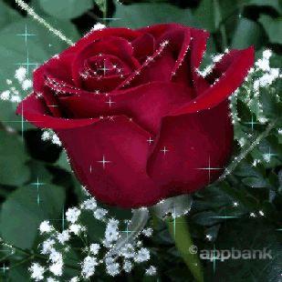 Gifs Rose (754)