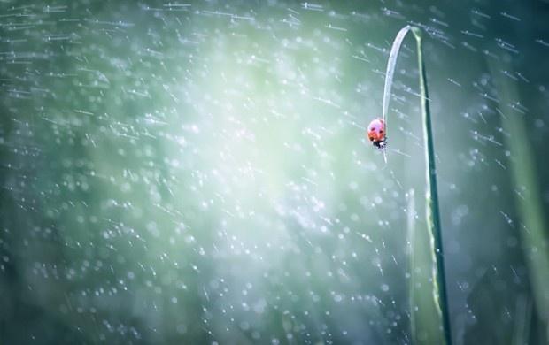 ladybug07