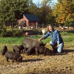 The American Guinea Hog: A Small Pig Breed for Homesteaders - Homesteading and Livestock - MOTHER EARTH NEWS