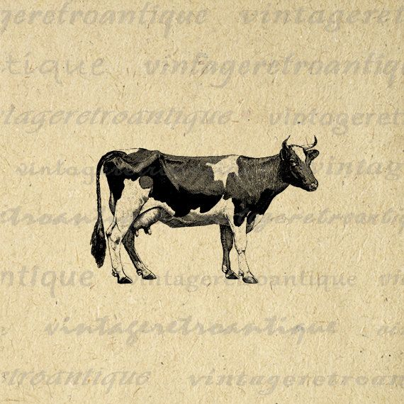 Digital Graphic Cow Printable Farm Animal Download Image Vintage Clip Art. High quality digital image download for printing, fabric transfers, and much more. Real printable antique clip art. Antique artwork. This graphic is high quality at 8½ x 11 inches large. Transparent background version included with every graphic.