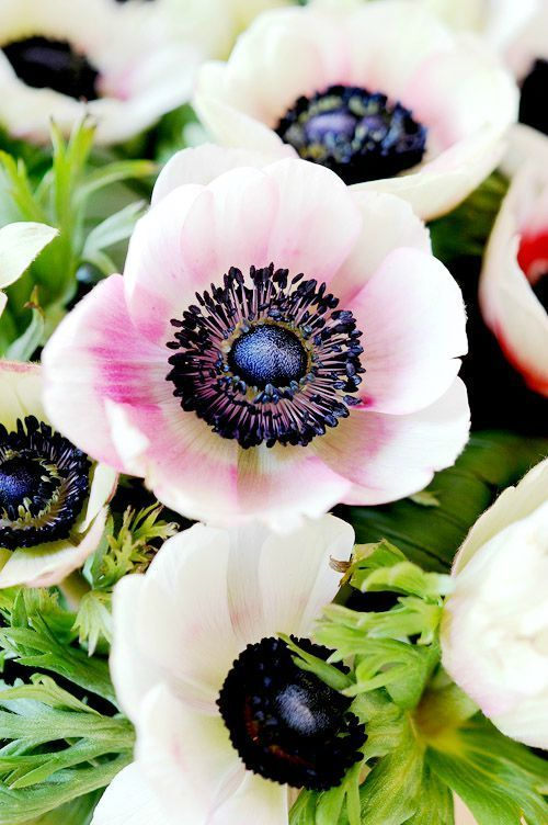 Blog de cuisine, mais il y a toujours de superbes photos de bouquets !