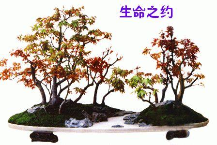 中国盆景艺术鉴赏 - chxliu03@126 - chxliu03@126的博客