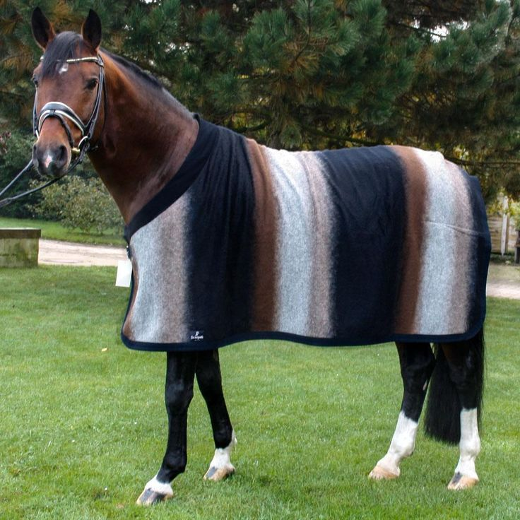 ANNA SCARPATI NOE WOOL RUG This is a fantastic Anna Scarpati Wool rug, which will keep your horse warm at shows as well as looking elegant. These wool rugs are really a lifetime investment as they do not get as much daily use as a stable rug or other everyday rug.