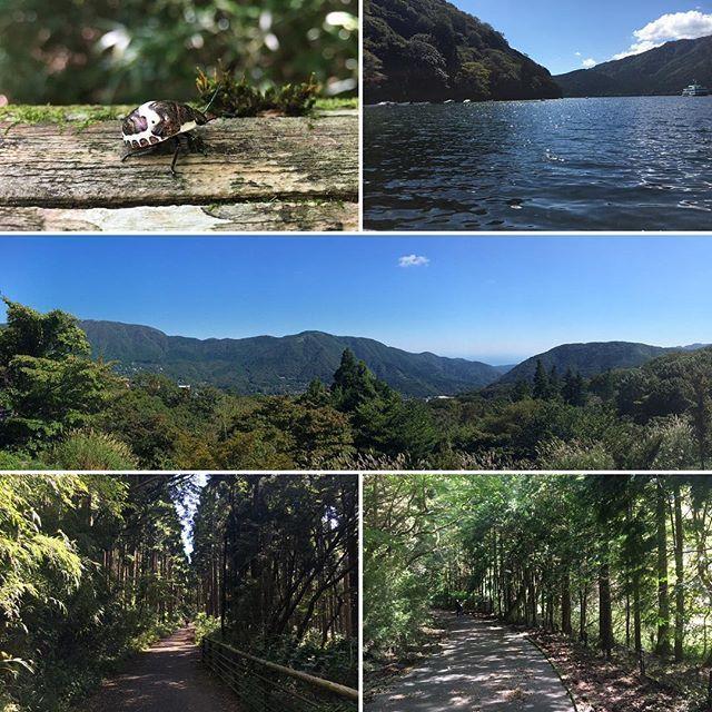 【yaru_sasaki】さんのInstagramをピンしています。 《Before we left Hakone, we took a small walk at Lake Ashinoko.  #hakone #箱根 #ashinoko #芦ノ湖 #lake #see #nature #natur #green #grün #みどり #緑 #mountain #berg #山 #bug #käfer #虫 #tree #baum #木 #forest #wald #森 #travel #reise #旅行 #japan #日本》