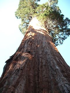 Travel With MWT The Wolf: Travel Notes Sequoia National Park California Usa ...