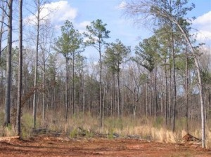Though there are many high-tech ways to find hunting land for lease in Georgia, you may also be able to find some hunting land simply by word of mouth.