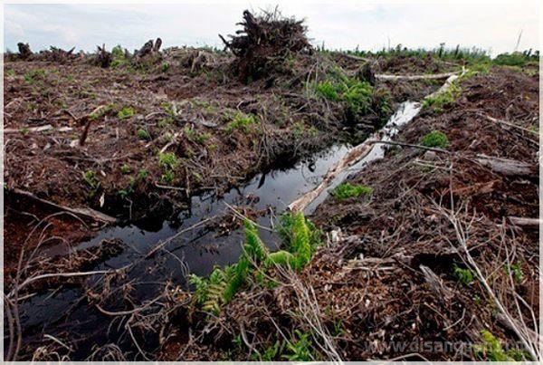 4 Jenis Tanah Bermasalah di Indonesia dan Gambarnya