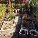 ¿Qué podemos cultivar en un huerto en semisombra?