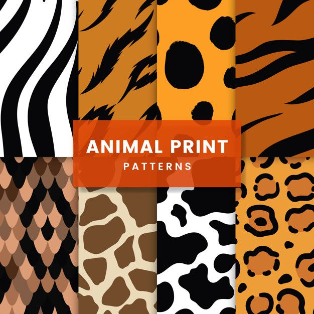 Download Set Of Seamless Animal Print Pattern Vectors For Free In