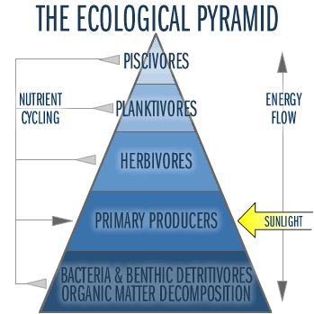 Aquatic Ecosystems--lake ecology