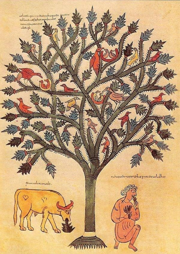 Árbol, pájaros, sueños. Beato de San Miguel de Escalada.