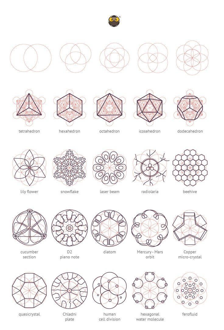 Geometry Matters:  Various nature elements that abide by geometric laws and construction patterns.  © Geometrymatters,2014