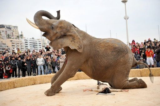 Shorter life span-Facts about circuses