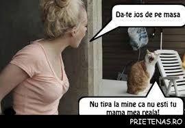 Imagini pentru pisici amuzante