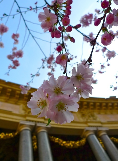 Paris' best kept secret...The cafe in the Petit Palais museum.. With the cherry blossoms in full bloom against the gilded opulence...Cherries Blossoms, Paris, Small Palace, Secret Th Cafes, Museums Cafes, Palais Museums, Places, Gilded Opulent, Full Bloom