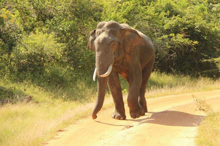 Viaggio attraverso lo Sri Lanka