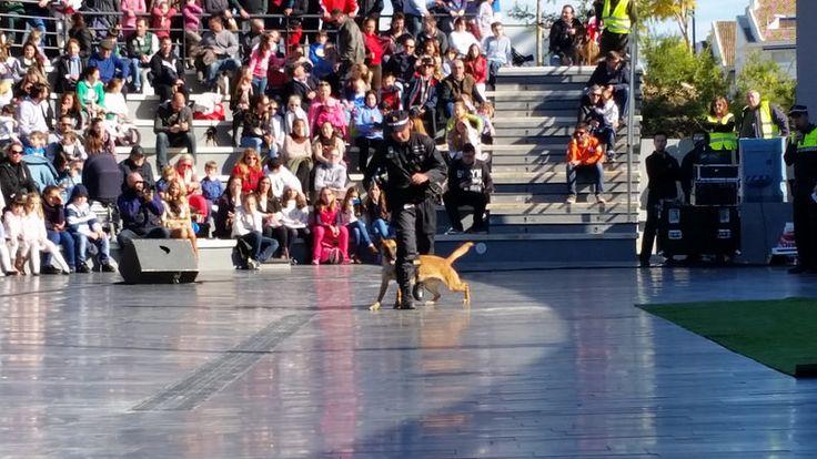 Exhibición de la Unidad Canina de la Policía Local