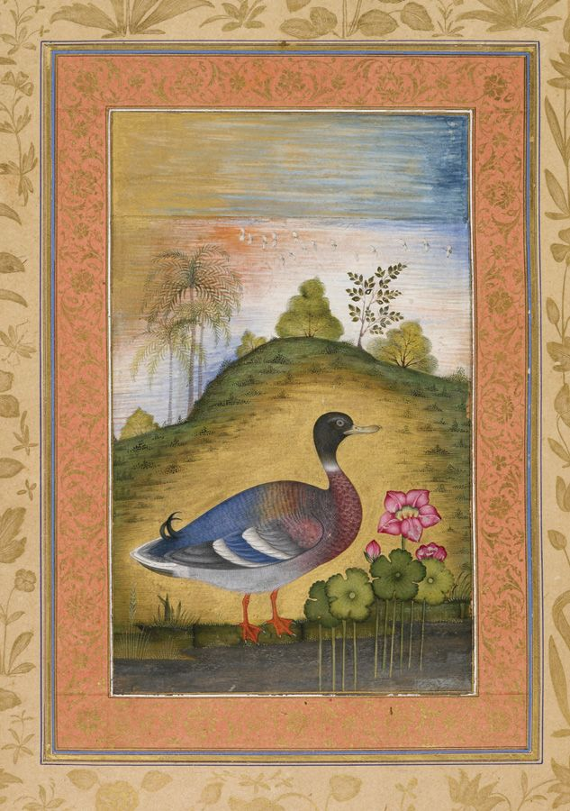 Drake at lake. Dara Schikoh Album (put together 1633–42 probably in Delhi), 1633, London, India House Office Library, A Moghul masterpiece in the collection of the British Library, the Dara Shikoh album is a manuscript collection of paintings and calligraphy assembled during the 1630s by Dara Shikoh (1615–1659), the eldest son of the Emperor Shah Jahan (1628–1658, the builder of the Taj Mahal) ...