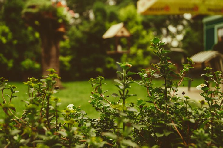 You can have a beautiful garden on a budget. Find out how.