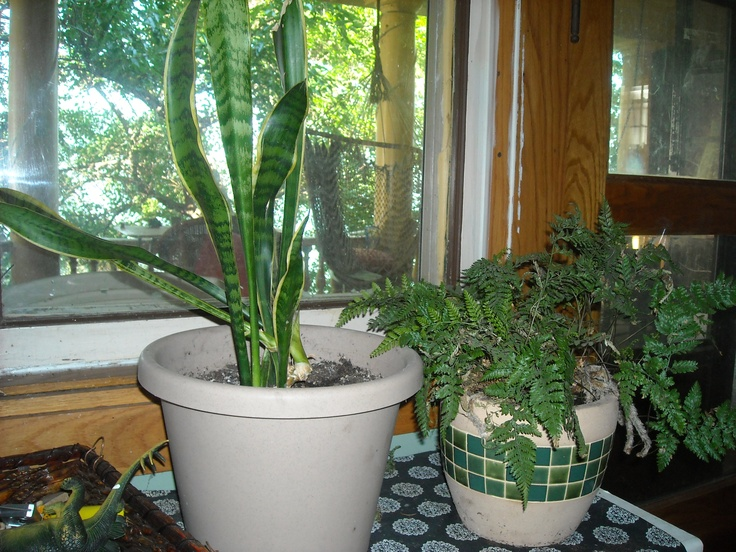 66 Best Images About Indoor House Plants For West Facing