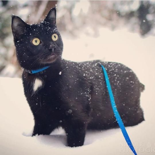 Black Cat With White Tail Ruling
